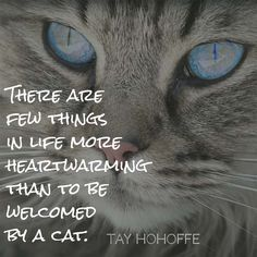 There are few things in life more heartwarming than to be welcomed by a cat. — Tay Hohoffe