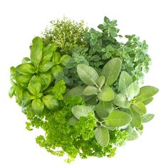 The Health Benefits of Herbs (And How to Use Them!)
