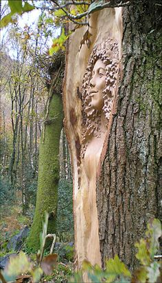 Means for the crones to spy. Very female orientated. these carvings allow the crones to possess them in order to see through them. Druids Trees: Oak-tree carving, by Peter Boyd, at Cae Mabon, Snowdonia, Wales. Green Man, Tree People, Tree Faces, Tree Carving, Wood Sculpture, Tree Art, Oeuvre D'art, Garden Art, Wood Art