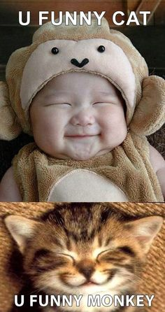 YOU FUNNY CAT ....