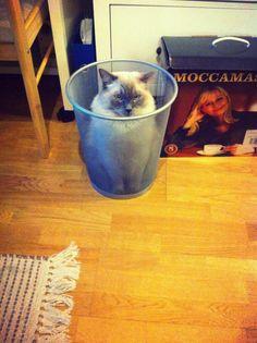 【笑撃】突っ込み待ちの猫ちゃん 画像15選♡