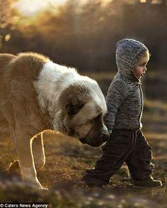 El niño que susurraba a los animales: Las fotografías íntimas de una madre capturan el vínculo especial de sus hijos con los animales