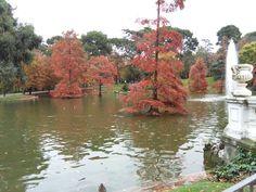 día 335: otoño en el Parque del Retiro. Preciosos colores <3