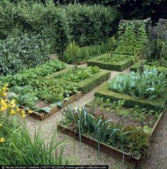 Clinton Lodge: in medieval style, potager as series of box-edged beds. Photographer: Nicola Stocken Tomkins