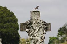 Not easy to get a bird ... Good job Graveyard Walker