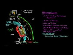 ▷ Three Types of Muscle - YouTube | Anatomy | Types of muscles