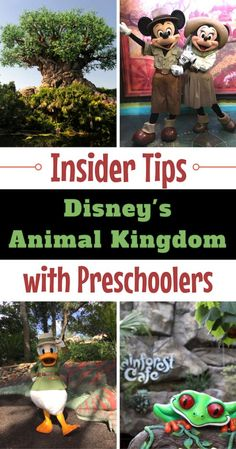 Wondering what are the best things to do at Animal Kingdom with Preschoolers? From shows to rides and restaurants, we've got you covered.