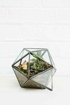 terrarium-en-verre-etoile-argente-deco-interieure-plante-verte-cactus