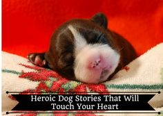 10 Heroic Dog Stories That Will Touch Your Heart