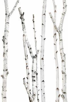 birch | STILL  (mary jo hoffman)