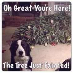 Haha happy holidays!