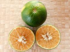 Tangelo - Citrus x tangelo 'Mapo' - kleine Zitruspflanze in Garten & Terrasse, Pflanzen, Sämereien & Zwiebeln, Pflanzen, Bäume & Sträucher | eBay