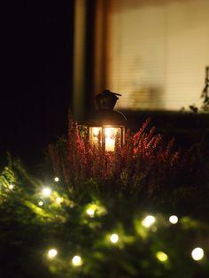 Kohti Joulua: Havuköynnös