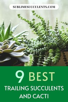 Here are the best trailing succulents and cacti to add on your collection. Find it all on this pin! Cacti And Succulents, Cactus Plants, Garden Plants, Succulent Species, Succulent Care, Growing Seeds, Types Of Plants, Artificial Plants, Air Plants