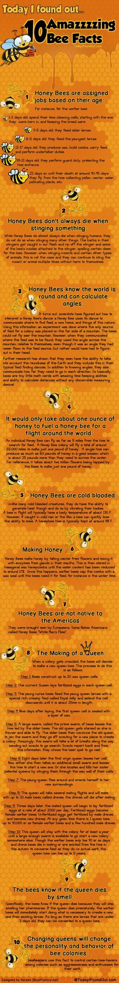 10 Amazzzzing Bee Facts