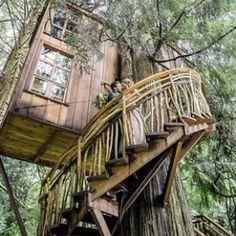 Ship Ladder, Building A Treehouse, Bird Barn, Cool Tree Houses, Tree House Designs, Sleeping Loft, Elegant Homes, Glass House, Rustic Design