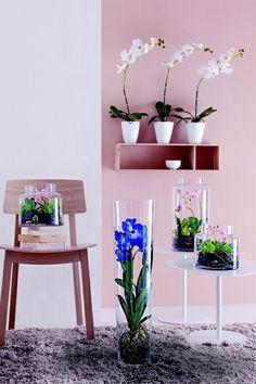 un mur d 39 orchid es une suspension jo a orchidaceae en 2018 pinterest claustra tag re et. Black Bedroom Furniture Sets. Home Design Ideas