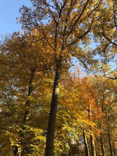autumn leaves🍂 #art #loveitsomuch #leaves