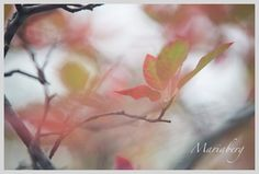 Late summer color with a touch of fall. Late Summer, Summer Colors, Feel Good, Touch, Autumn, App, Nature, Plants, Inspiration