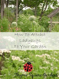 TSG: How To Attract Ladybugs To Your Garden