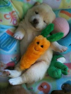 Golden puppy and his carrot!