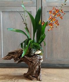 Friday Favorites: Rustic Fall Florals - The Scout Guide Indoor Orchid Care, Indoor Orchids, Orchids Garden, Orchid Flower Arrangements, Orchid Planters, Orchid Pot, Phalaenopsis Orchid Care, Dendrobium Orchids, Oncidium Orchid