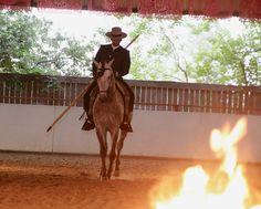 Caballos Lusitanos en Rancho Haras Dos Cavaleiros