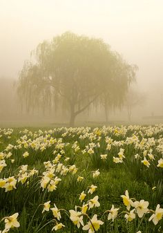 Misty March Morning by CLIFFWALKER on Flickr