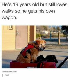 """25 Squee-Worthy Animal Memes For Your Weekend Cute Fix - Funny memes that """"GET IT"""" and want you to too. Get the latest funniest memes and keep up what is going on in the meme-o-sphere. Funny Animal Memes, Dog Memes, Funny Animal Pictures, Cute Funny Animals, Cute Baby Animals, Funny Dogs, Funny Memes, Memes Humor, Funny Videos"""