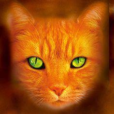 Warriors - The darkest hour - German Cover(Cat) Sandstorm/Firestar