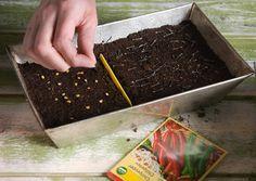 Viherpihan kätevän kalenterin avulla kylvät ja esikasvatat yrtit ja vihannekset sopivaan aikaan. Aloita ajoissa ja valmistaudu nauttimaan herkullisesta sadosta!