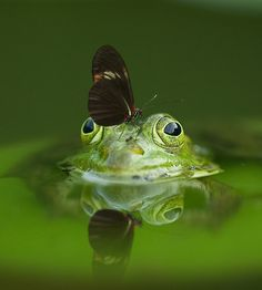 A picture of a butterfly on a frog.