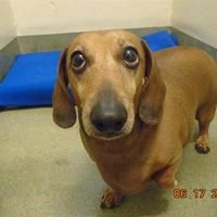 Available Pets At Lee S Summit Animal Control In Lee S Summit
