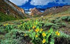 Fotoimagini: Primavara,la munte