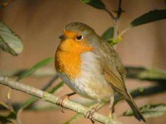 Tips voor het ophangen van vogelhuisjes | Tuin en Balkon