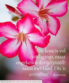 Die lewe is. Woman Quotes, Me Quotes, Inspirational Quotes Wallpapers, Afrikaanse Quotes, Goeie More, Printable Quotes, My King, Wallpaper Quotes, Things To Think About