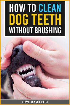 How to Clean Dog Teeth Without Brushing. #LoveOfApet #CleanDogTeeth #dogcare #DogCleaning