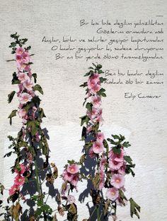 şiir, wall, flower edip cansever...