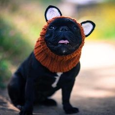 """Why is that silly """"What does the fox say?"""" song stuck in my head?! LIKE if you saw that weird music video. #foxzoosnood . . : @auggie_thefrenchie #zoosnoods #frenchbulldog #frenchbulldogsofinstagram #dog #themaxbone #puppy #dogsofinstagram #frenchie #bulldog #instapet #pet #ilovemydog #dogstagram #petstagram #bully #frenchbully #squishyfacecrew #frenchiegram #bullypics #theworldofbullies #instadog #puppysnaps #frenchiegram #barkleyshomies #frenchiesoverload #frenchies1"""
