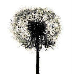 Irving Penn's flowers