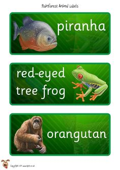 Teacher's Pet - Rainforest Eco Word Mat - FREE Classroom Display Resource - EYFS, KS1, KS2, rain, forest, deforestation, trees, monkeys, snakes, parrots, sustainability