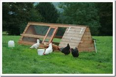 chickens « Uphilldowndale