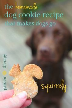 The Homemade Dog Cookies That Makes Dogs Go Squirrley - Garden Therapy