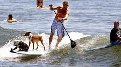 Surfing Noosa. Great fun! A fine balancing act during a practice session. Got to love those surfing dogs... Photo credit: couriermail.com.au