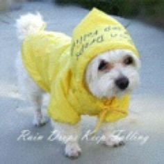 Such a cute raincoat!