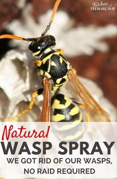 You don't need Raid or yucky chemicals to kill a wasp nest or bees. Get rid of wasps without chemicals with this super simple natural wasp killer spray recipe. Bee Spray, Wasp Spray, Tick Spray, Bee Killer, Wasp Killer, Spider Killer, Natural Wasp Repellent, Insect Repellent, Killing Wasps