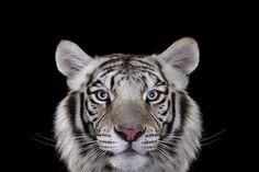 40 Breathtaking Portraits Capture The True Beauty Of Wildlife