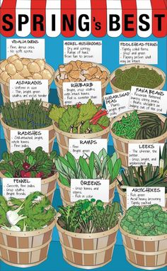 What's the best foods to get in the spring? Here's some ideas! Find them at the farmers market this weekend!