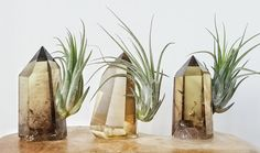 Tillandsia Air Plant and Smokey Citrine Crystal Tower by AURAMORE