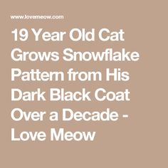 19 Year Old Cat Grows Snowflake Pattern from His Dark Black Coat Over a Decade - Love Meow